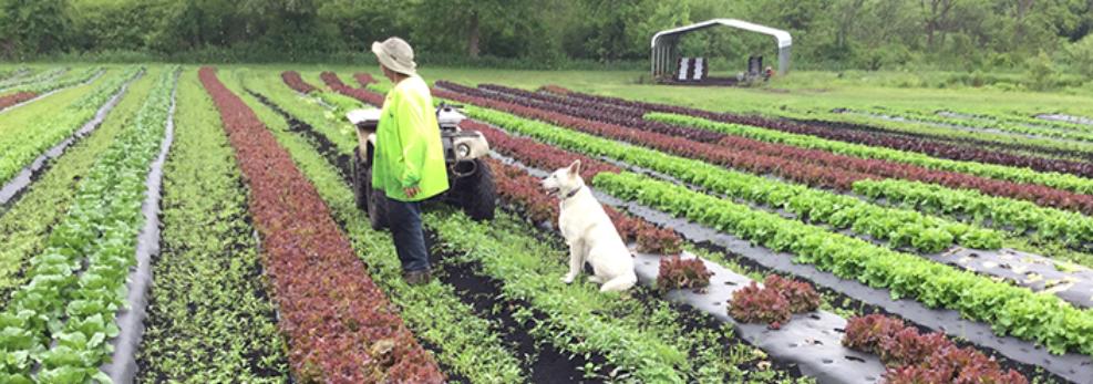 JP Organics farm